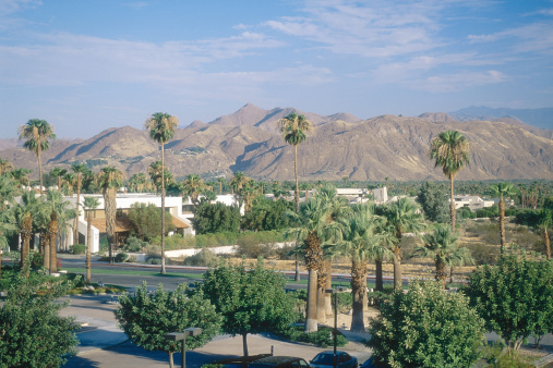 1990-1999「Palm trees along road in residential area, Palm Springs, California, USA」:スマホ壁紙(14)