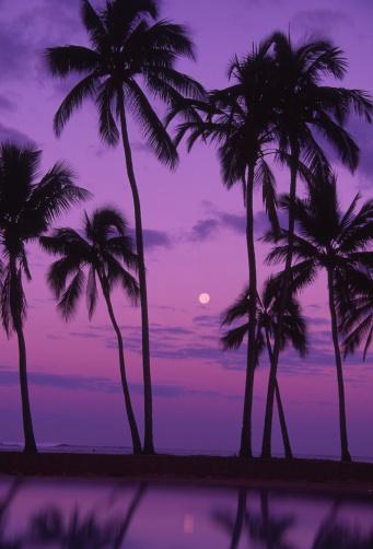 月「Palm trees with moon in a bright pink and purple sky, reflecting on still water.」:スマホ壁紙(4)