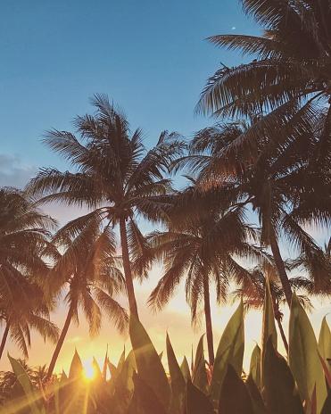 Atmospheric Mood「Palm trees on a beach at sunset, Orange County, California, United States」:スマホ壁紙(14)