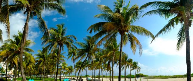 Miami Beach「Palm trees, Ocean Drive, South Beech, Miami」:スマホ壁紙(4)