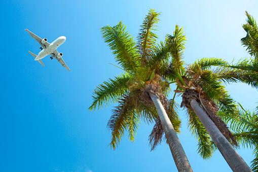 Airplane「Palm Trees And Airplane」:スマホ壁紙(3)