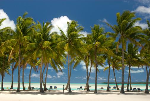 アイツタキ島「ヤシの木の白い砂浜のビーチで、南太平洋」:スマホ壁紙(12)