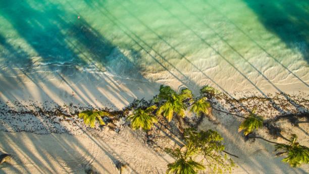 Palm trees along the sandy beach:スマホ壁紙(壁紙.com)