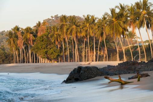 Sayulita「Palm Trees Rocks And Driftwood On A Beach」:スマホ壁紙(8)