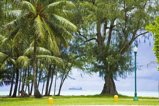 北マリアナ諸島「Palm trees by beach, Saipan Island, USA」:スマホ壁紙(18)
