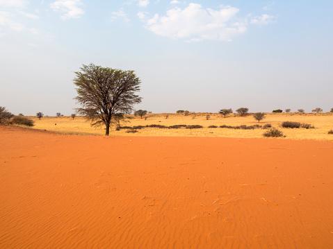 Kalahari Desert「Africa, Namibia, Kalahari」:スマホ壁紙(18)
