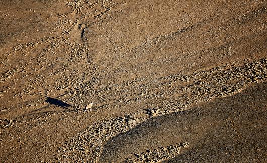Gemsbok「Africa, Namibia, Namib-Naukluft National Park, Namib desert, Kulala Wilderness Reserve, gemsbok. Oryx gazella」:スマホ壁紙(10)