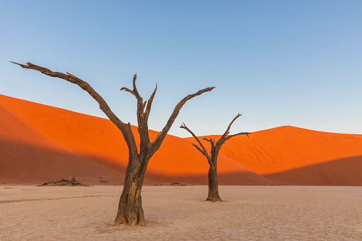 Namibia「Africa, Namibia, Namib-Naukluft National Park, Deadvlei, dead acacia trees in clay pan」:スマホ壁紙(7)