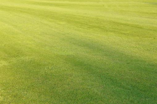 Green - Golf Course「Golf grass」:スマホ壁紙(13)