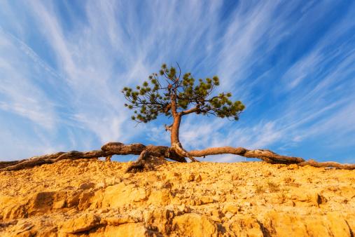 Single Tree「USA, Utah, Bryce Canyon, View of tree on top of rock」:スマホ壁紙(4)