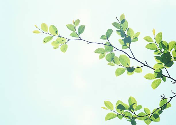 Branches and Leaves:スマホ壁紙(壁紙.com)