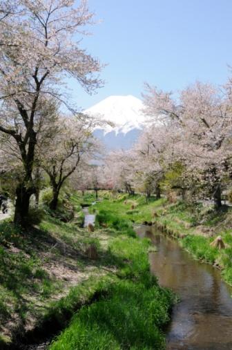 梅の花「Japanese Plum Blossoms and Mt. Fuji」:スマホ壁紙(11)