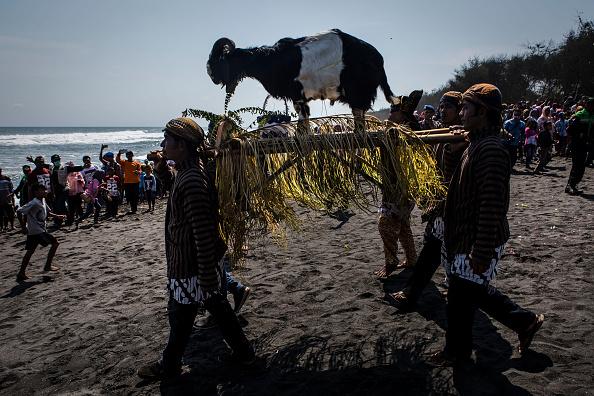 動物「Javanese People Celebrate Islamic New Year」:写真・画像(19)[壁紙.com]