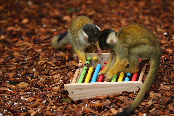 動物「London Zoo's Annual Animal Stocktake」:写真・画像(13)[壁紙.com]