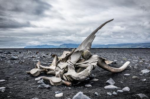 ガラス「Whale bones」:スマホ壁紙(11)