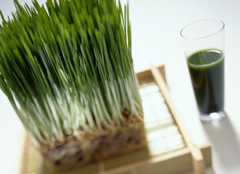 Wheatgrass Juice「Wheatgrass Plant near a Wheatgrass Drink」:スマホ壁紙(12)
