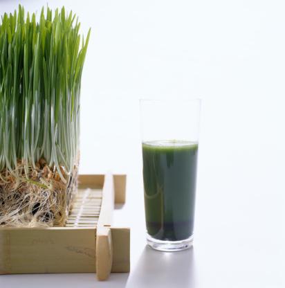 Alternative Medicine「Wheatgrass Plant near a Wheatgrass Drink」:スマホ壁紙(13)