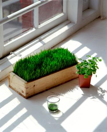 Wheatgrass Juice「Wheatgrass and herbs」:スマホ壁紙(11)