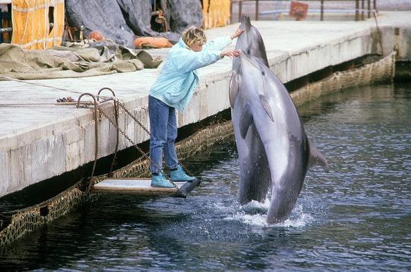 Aquatic Organism「Ukrainians war dolphins」:写真・画像(4)[壁紙.com]