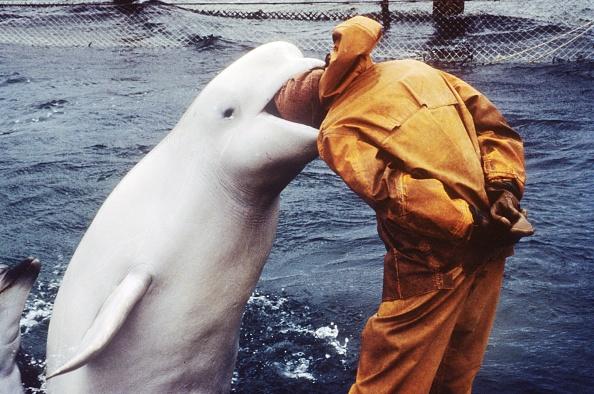 Aquatic Mammal「Ukrainians war dolphins」:写真・画像(0)[壁紙.com]