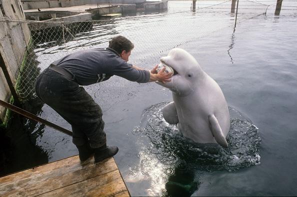 Aquatic Mammal「Ukrainians war dolphins」:写真・画像(2)[壁紙.com]