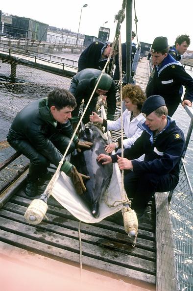 Wojtek Laski「Ukrainians war dolphins」:写真・画像(17)[壁紙.com]