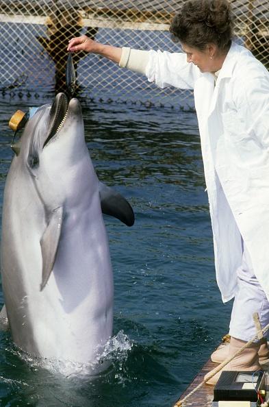 Aquatic Organism「Ukrainians war dolphins」:写真・画像(2)[壁紙.com]