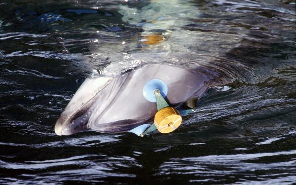 Aquatic Mammal「Ukrainians war dolphins」:写真・画像(3)[壁紙.com]