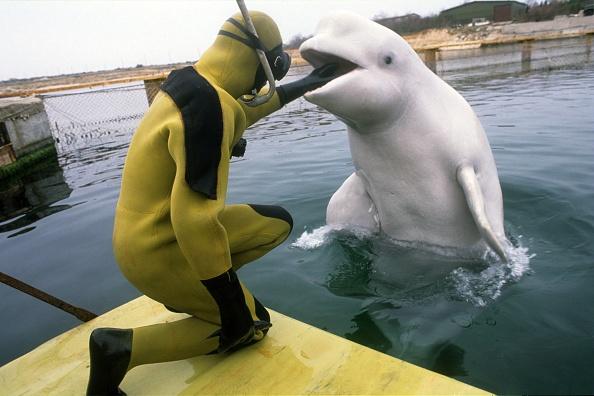 Aquatic Mammal「Ukrainians war dolphins」:写真・画像(1)[壁紙.com]
