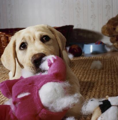 Mischief「Puppy Tearing Toy Apart」:スマホ壁紙(9)