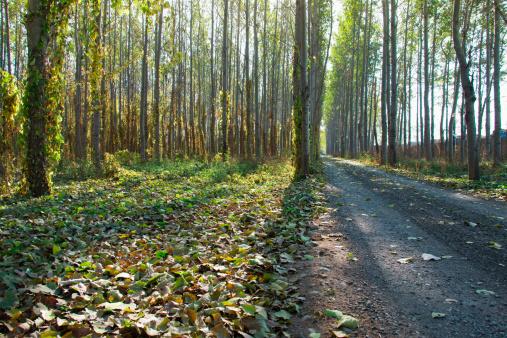 Freedom「Trees and road」:スマホ壁紙(11)