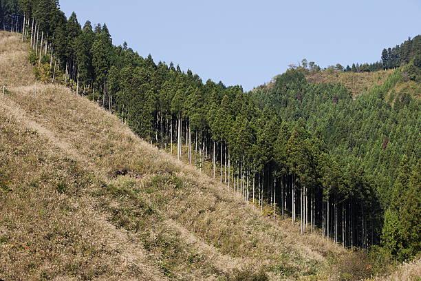 The felling of the tree:スマホ壁紙(壁紙.com)