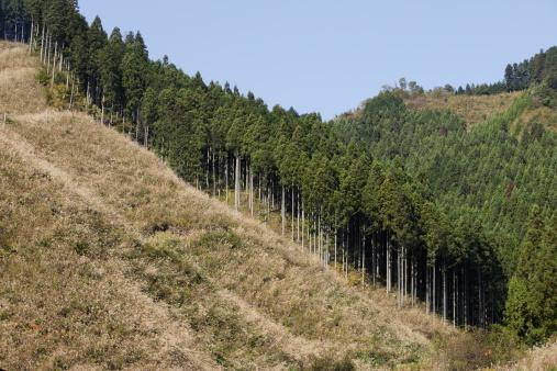 Deforestation「The felling of the tree」:スマホ壁紙(1)