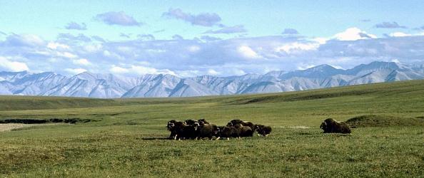 Arctic National Wildlife Refuge「Arctic National Wildlife Refuge」:写真・画像(2)[壁紙.com]