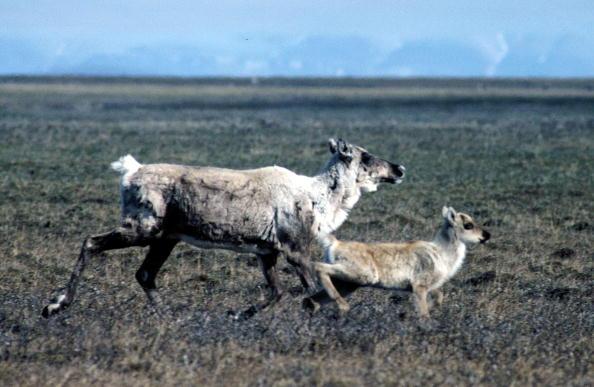 Arctic National Wildlife Refuge「Arctic National Wildlife Refuge」:写真・画像(18)[壁紙.com]