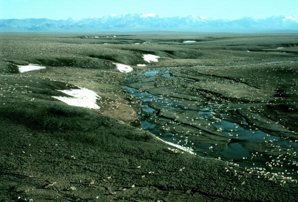Arctic National Wildlife Refuge「Arctic National Wildlife Refuge」:写真・画像(15)[壁紙.com]