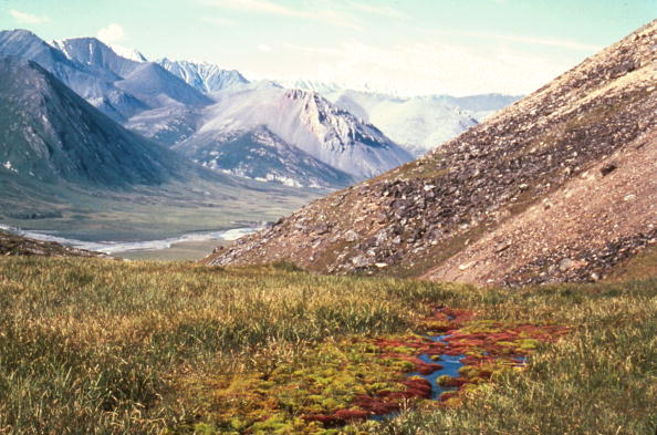 Land「Arctic National Wildlife Refuge Eyed for Oil Drilling」:写真・画像(19)[壁紙.com]