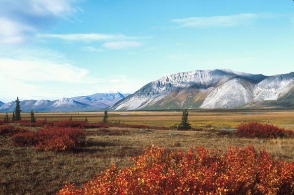 Arctic National Wildlife Refuge「Arctic National Wildlife Refuge Eyed for Oil Drilling」:写真・画像(12)[壁紙.com]