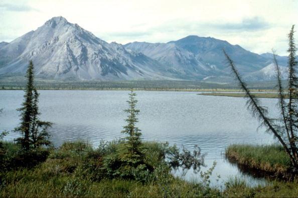 Arctic National Wildlife Refuge「Arctic National Wildlife Refuge Eyed for Oil Drilling」:写真・画像(14)[壁紙.com]