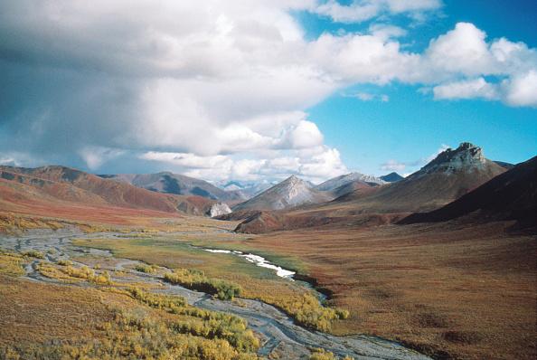 Arctic National Wildlife Refuge「Arctic National Wildlife Refuge Eyed for Oil Drilling」:写真・画像(0)[壁紙.com]