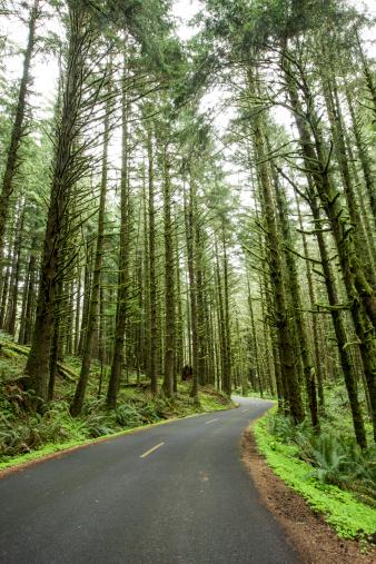 Cannon Beach「A road amongst a green lush forest.」:スマホ壁紙(8)