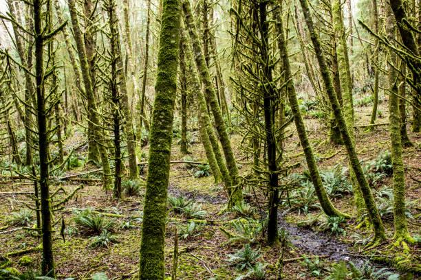 Green moss on forest trees:スマホ壁紙(壁紙.com)