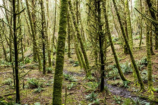 Cannon Beach「Green moss on forest trees」:スマホ壁紙(11)