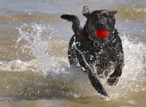 Standing Water「Chicago's Doggy Beach」:写真・画像(8)[壁紙.com]