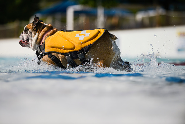 Michael Ciaglo「Colorado Water Park Holds Bow Wow Beach Dog Day To Close Out The Summer」:写真・画像(19)[壁紙.com]
