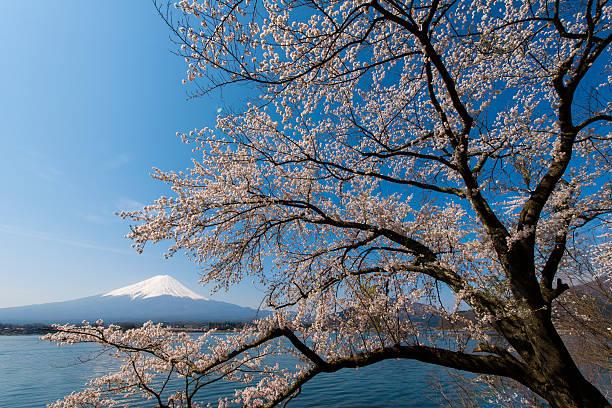 Blue Sky Mt Fuji and Cherry Blossom:スマホ壁紙(壁紙.com)