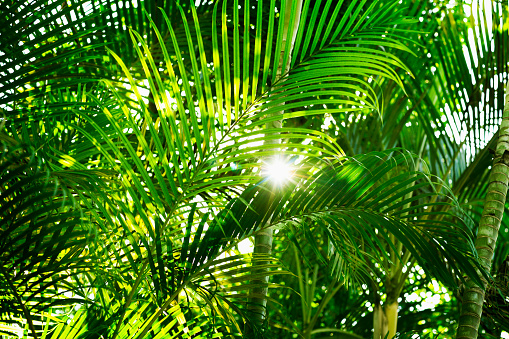 Zhongshan - Guangdong Province「Palm leaf in sunlight」:スマホ壁紙(0)