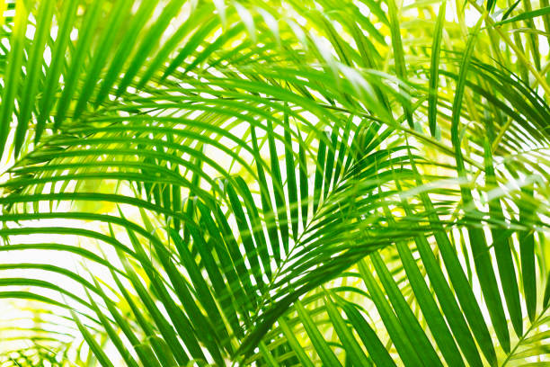 Palm leaf in sunlight:スマホ壁紙(壁紙.com)