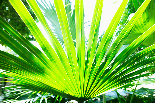 Zhongshan - Guangdong Province「Palm leaf in sunlight」:スマホ壁紙(6)