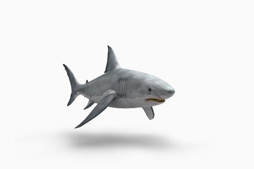 Furious「Shark floating on white background」:スマホ壁紙(9)